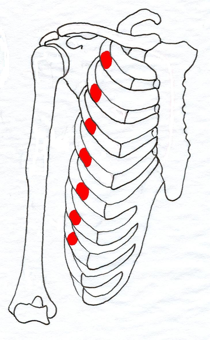 how to build serratus anterior muscles