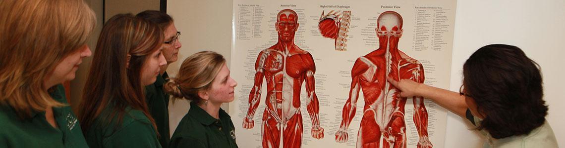 Rehabilitative Health Programs